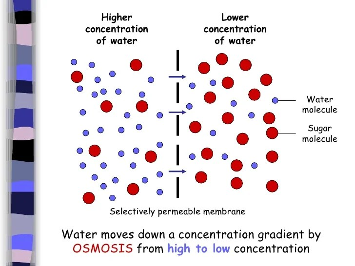 a lab experiment on cell membrane in diffusion Lab 4 diffusion and osmosis lab propose and test a hypothesis for an osmosis experiment the behavior of a cell's plasma membrane diffusion and.