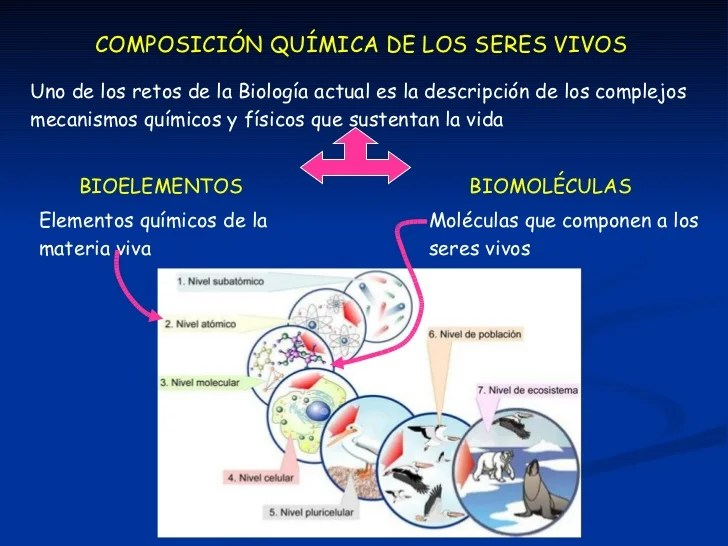 Bioelementos Y Biomolculas Slideshare Knownledge