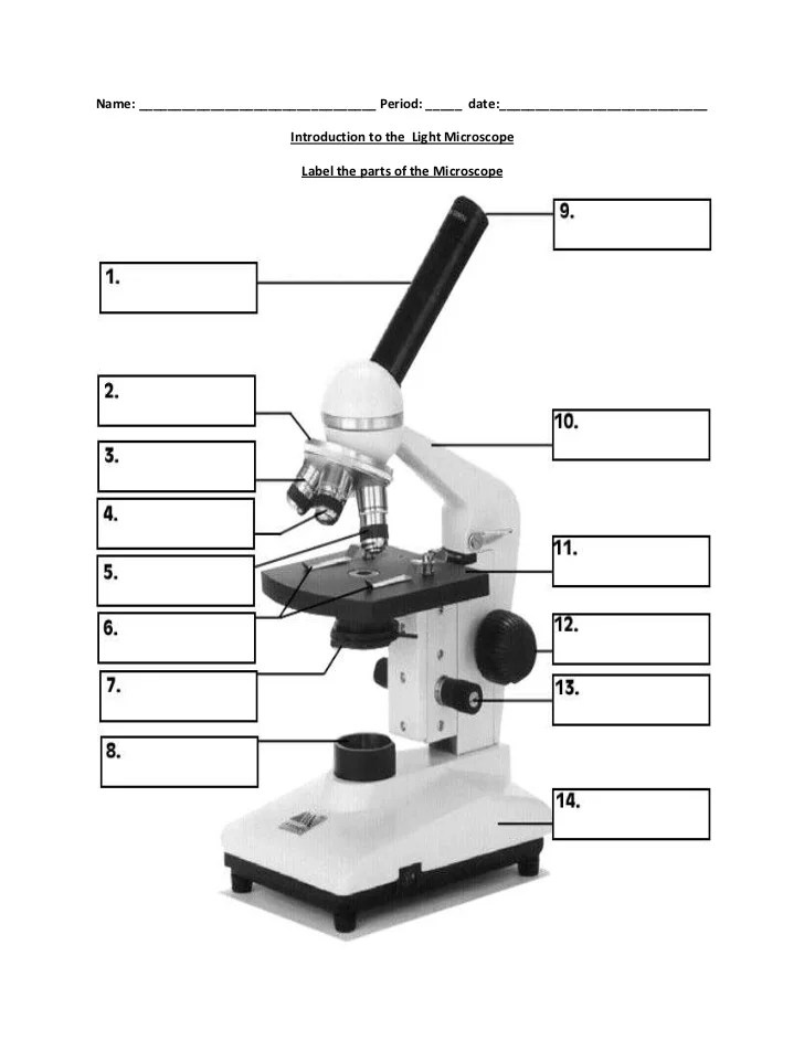Worksheets Microscope Labeling Worksheet microscope diagram worksheet photos pigmu davezan