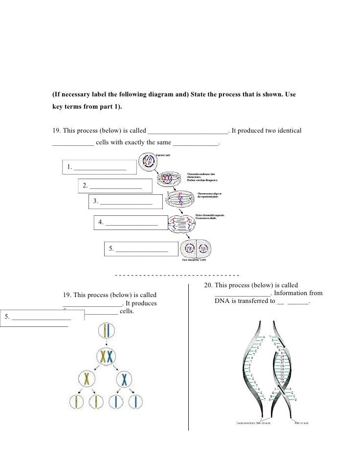 cell wikki worksheet