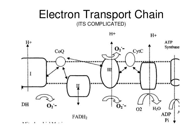 diagram of etc