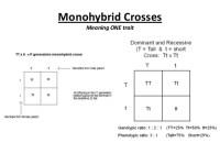 Printables. Monohybrid And Dihybrid Crosses Worksheet ...