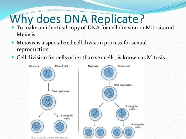dna essay dna replication essay questions and answers order custom
