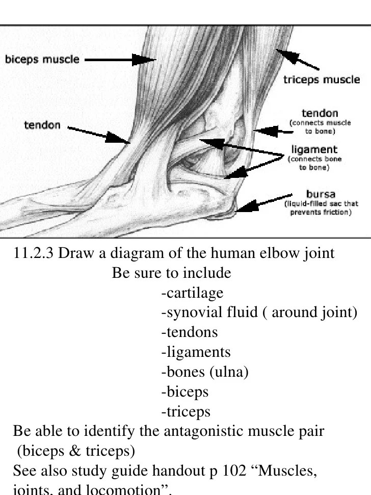 elbow diagram ib