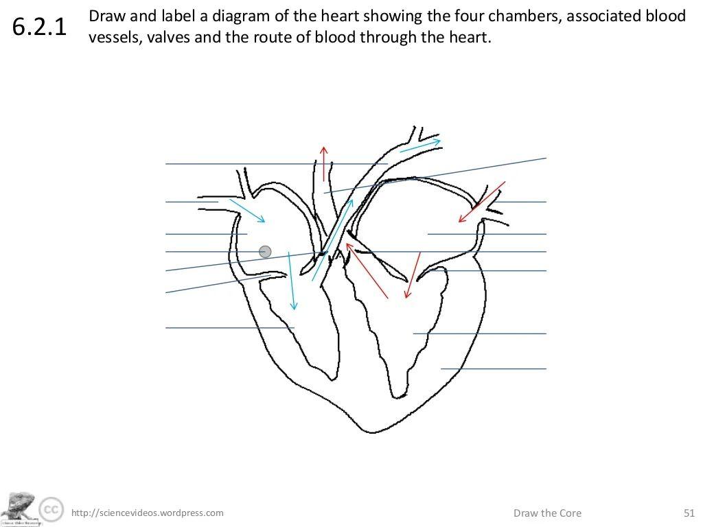 pics photos simple heart diagram label