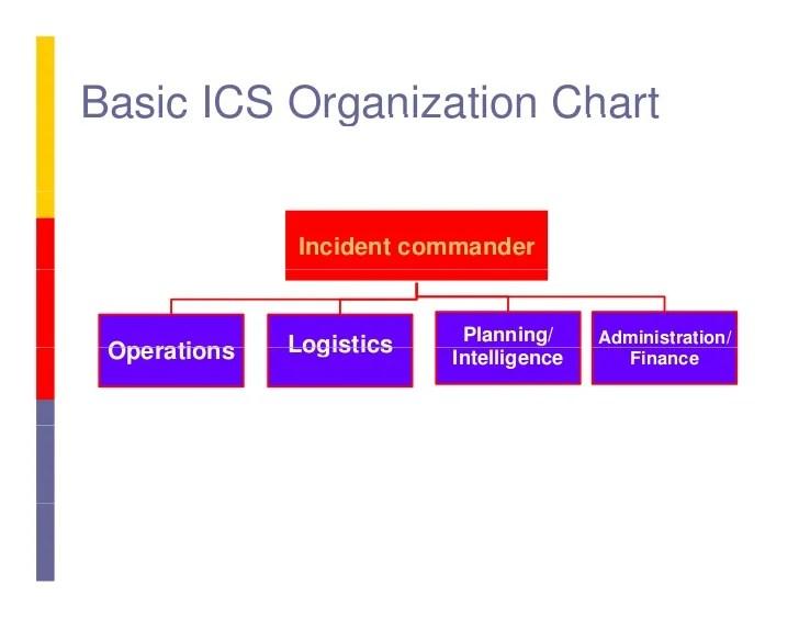 Basic Organization Chart kicksneakers