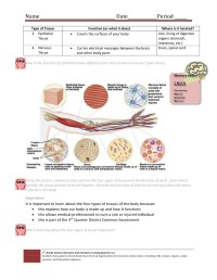 Cell & Tissue Handout