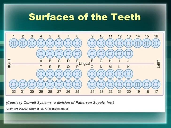 dental charting examples