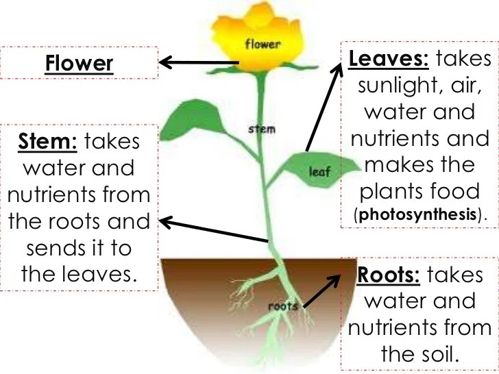 Plant Life Cycles - Lessons - Tes Teach