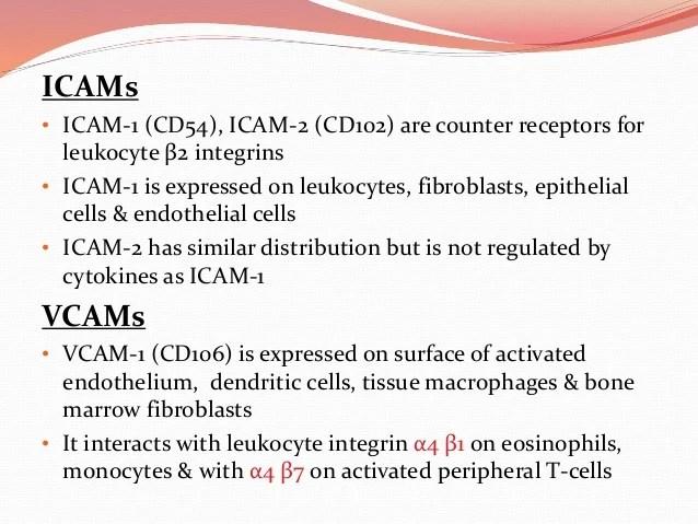 Inter Cellular Junctions