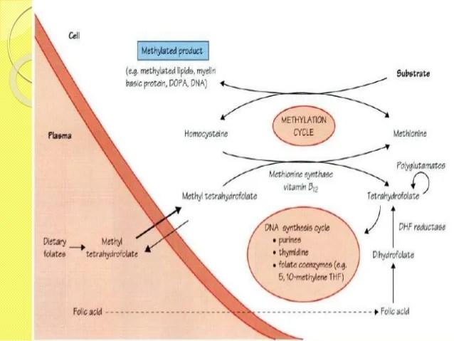 Anemia Hemolitik Autoimun Adalah Pdf