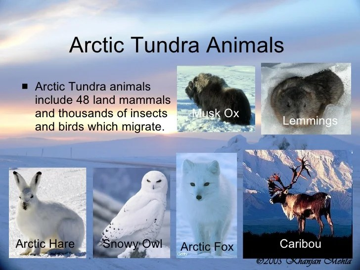 L18 Tundra Project