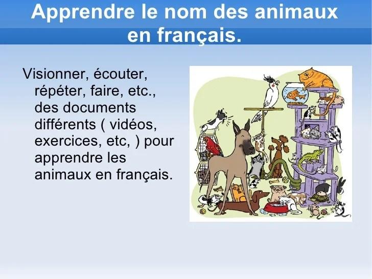 cv pour formation avec les animaux
