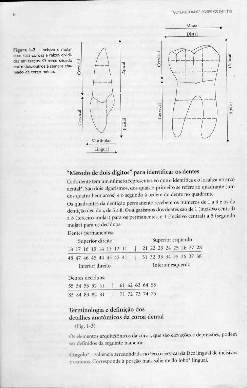 Groovy Mado Auto Electrical Wiring Diagram Wiring Database Denligelartorg