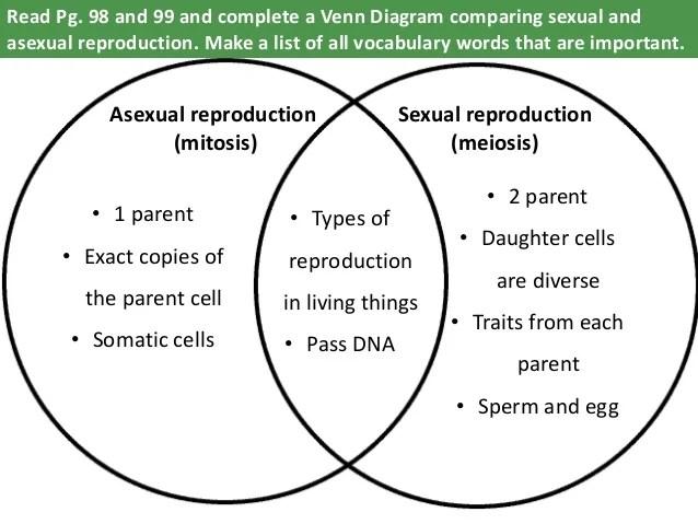 venn diagram comparing mitosis and meiosis - Canasbergdorfbib