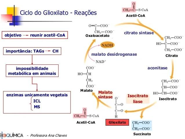 Metabolismo De Lipidios Graduacao Pdf