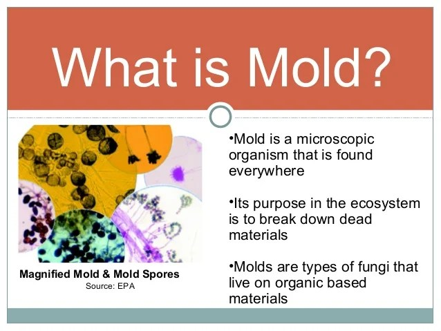Mold To Sold - Fact Vs. Fiction