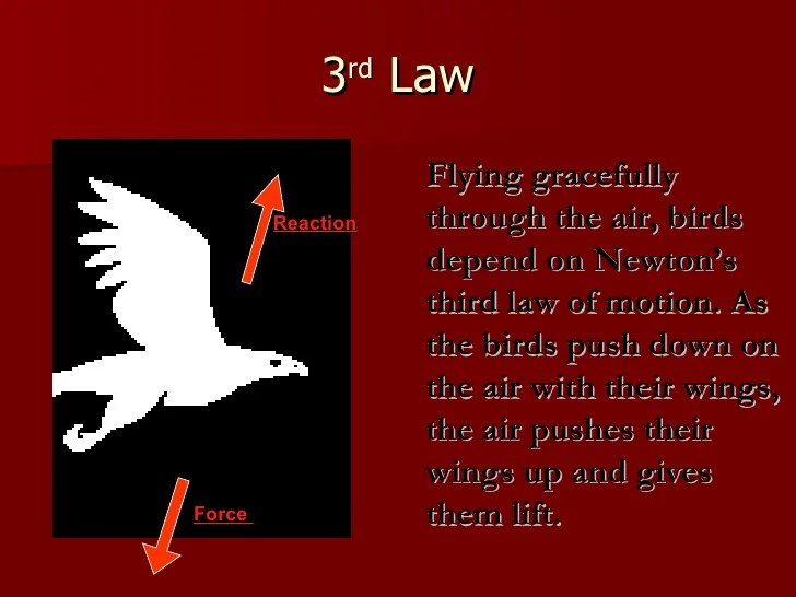 Newton39s Laws Of Motion
