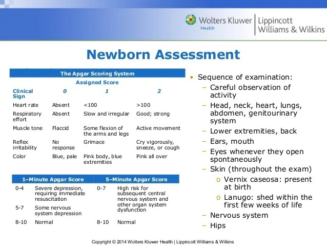 Newborn Infant Ppt Ppt18