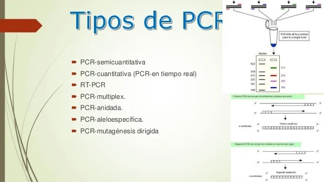Reaccion En Cadena De La Polimerasa Pcr