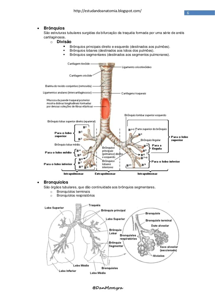 faringe auto electrical wiring diagramapostila sistema respirat u00f3rio