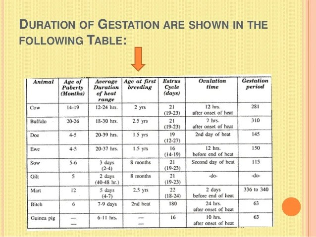 animals gestation period chart - Antaexpocoaching