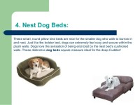 The importance of a good dog bed