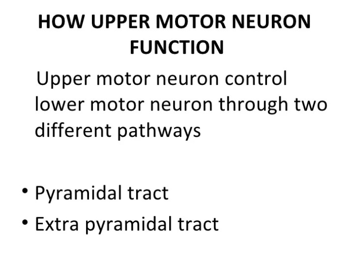 Upper Motor Neuron Lesion Vs Lower Ppt Caferacersjpg