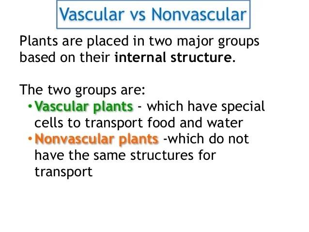 vascular vs nonvascular plants