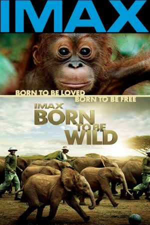 Image Born to Be Wild