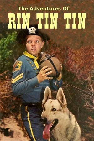 Image The Adventures of Rin Tin Tin