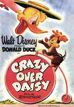Crazy Over Daisy