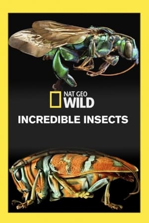 Incredible Insects