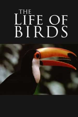 Image The Life of Birds
