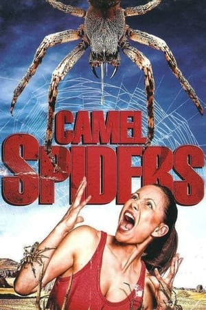 Image Camel Spiders