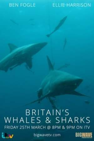 Image Britain's Whales and Sharks