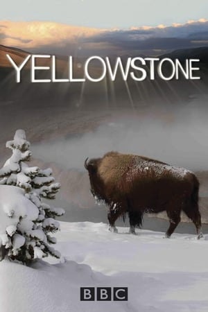 Image Yellowstone
