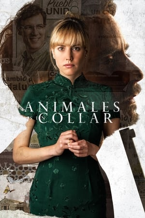 Image Animales sin collar
