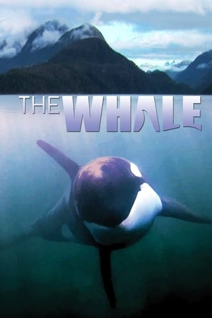 Image The Whale