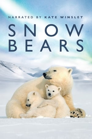 Image Snow Bears
