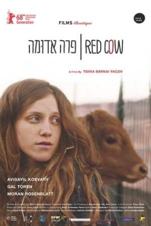 Image Red Cow
