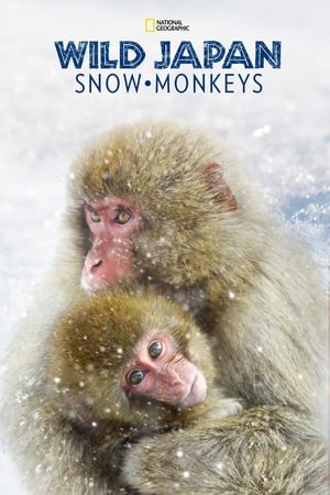 Image Wild Japan: Snow Monkeys