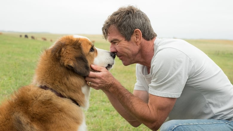 Watch A Dog's Purpose Full Movie Online Free
