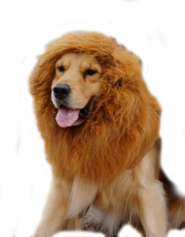 Fullsize Of Dog Lion Costume