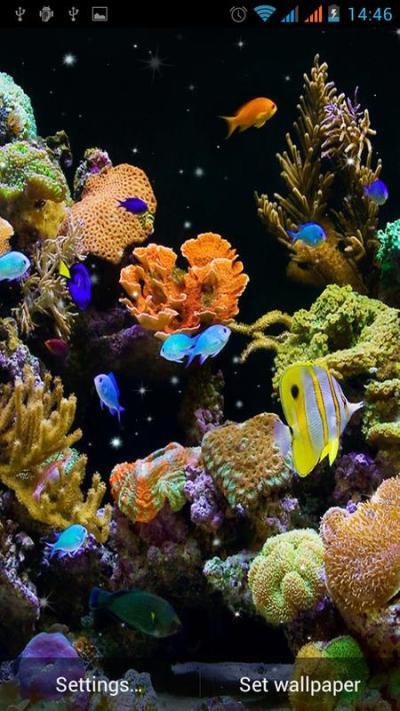 Aquarium Live Wallpaper APK Download - Free ...