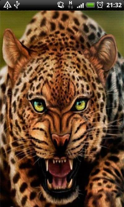 Leopard Live Wallpaper APK Download - Free Personalization APP for Android | APKPure.com