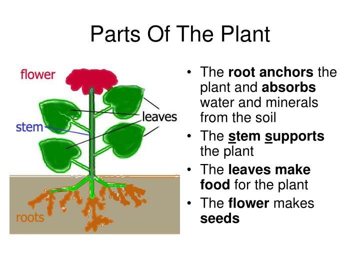 PPT - Flowering Plants PowerPoint Presentation - ID1703057