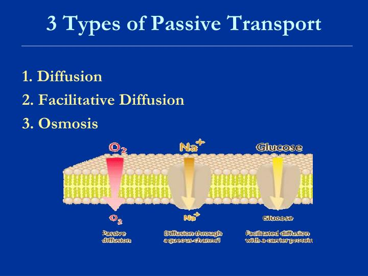 PPT - Cellular Transport How Molecules Are Transported Across The