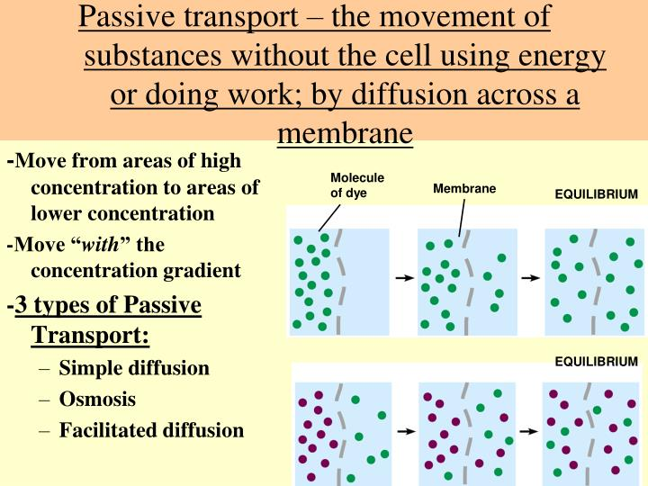 PPT - The Cell Membrane PowerPoint Presentation - ID1781216