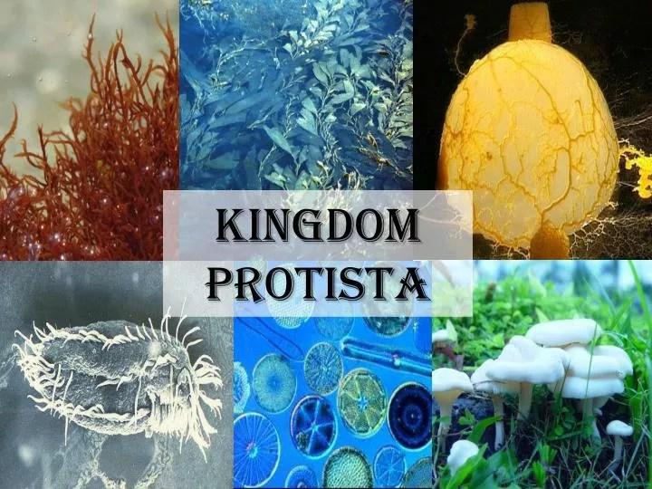 PPT - kingdom Protista PowerPoint Presentation - ID1931698
